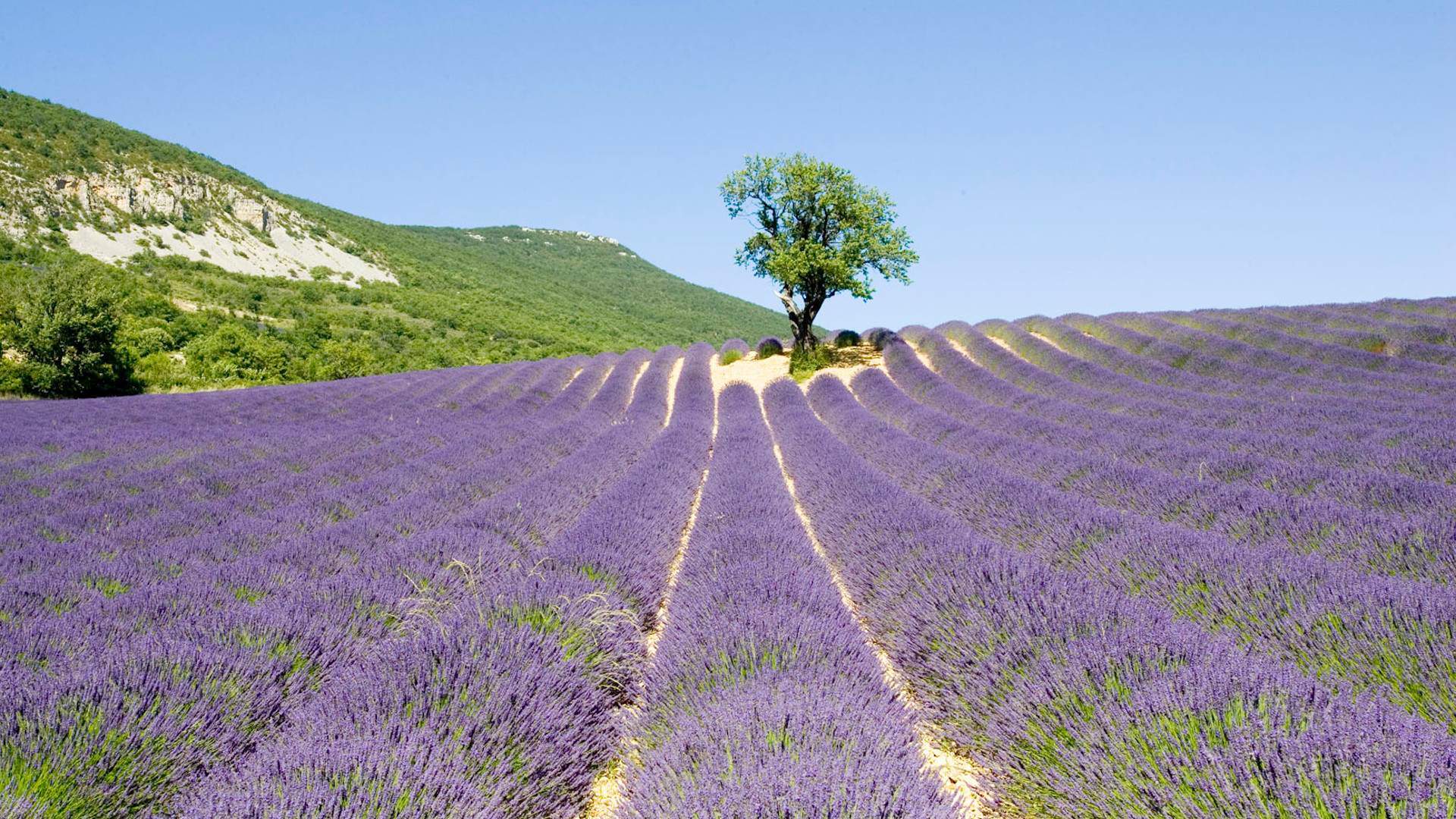 DMC Destination Provence