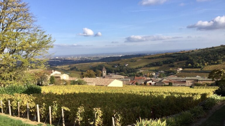 Discover the Burgundy vineyards with Go Côté Saône