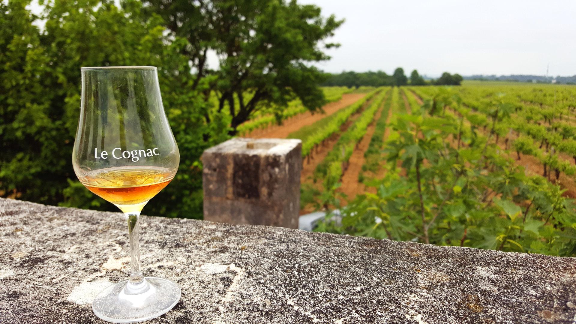 DMC Cognac Tasting Tour
