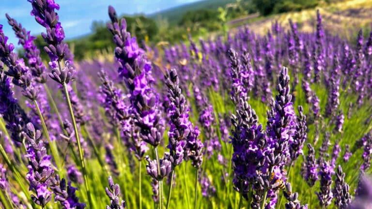 Destination Provence