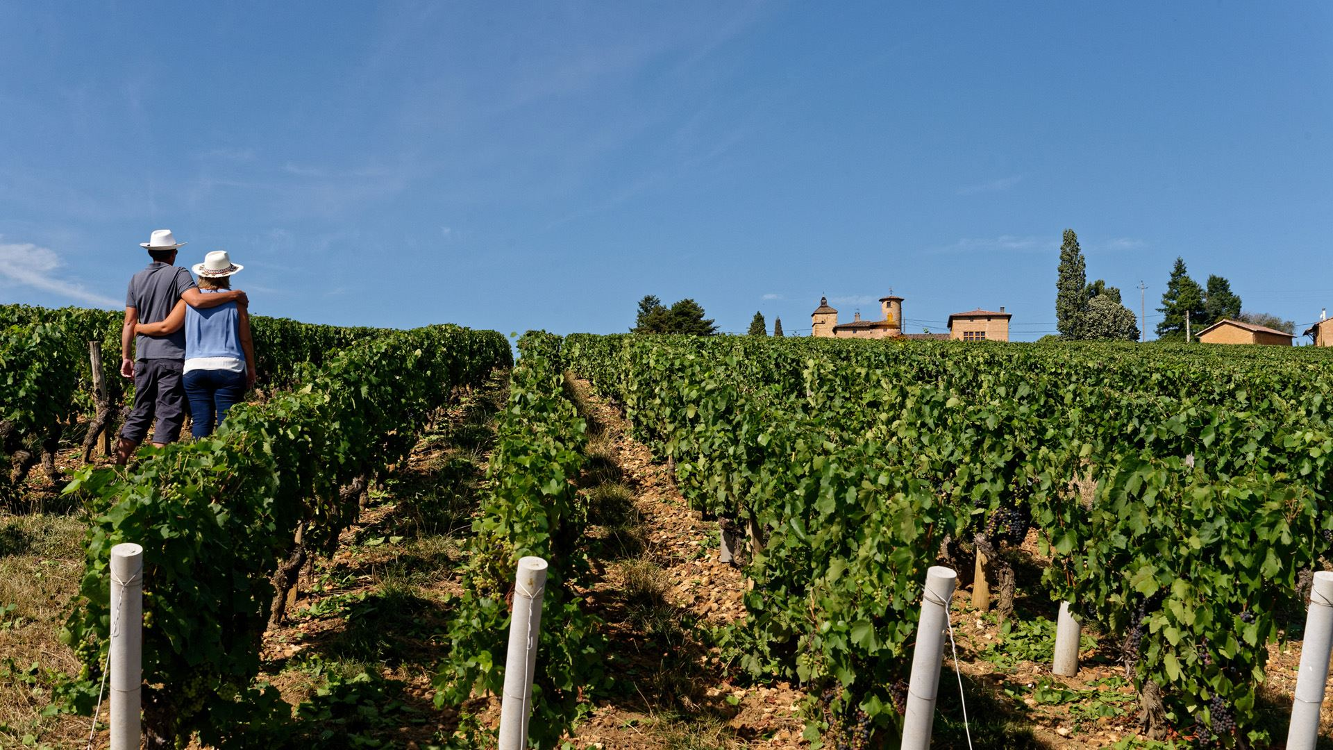 WINE TOUR IN THREE EXCEPTIONAL VINEYARDS